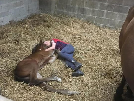 Foal therapy!
