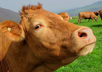 animal-close-up-countryside-63246.jpg