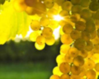 vineyard contractors blenheim