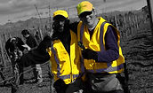 vineyard contractors blenheim