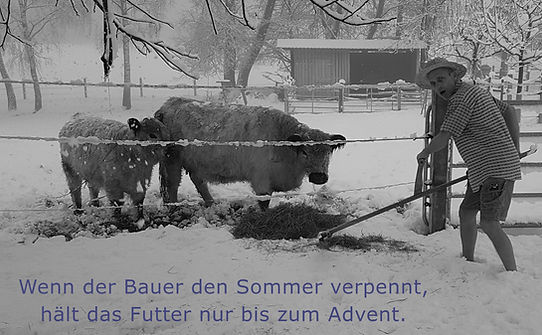 Bauer_Win.jpg