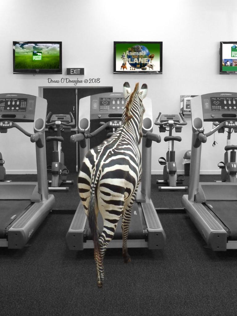 Zebra Gym