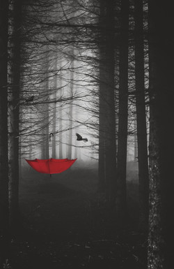 Umbrella in the Woods