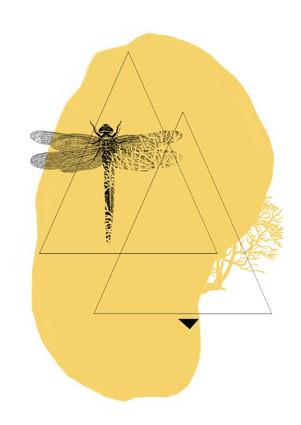 dragonfly2 (Medium).jpg