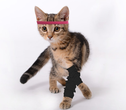 Zumba Kitty
