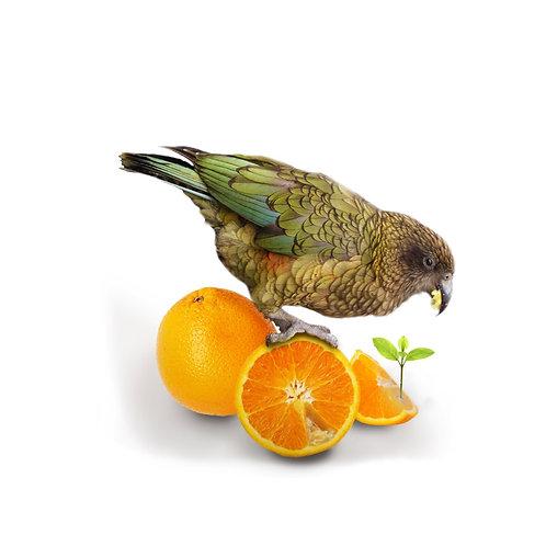 Kea Orange