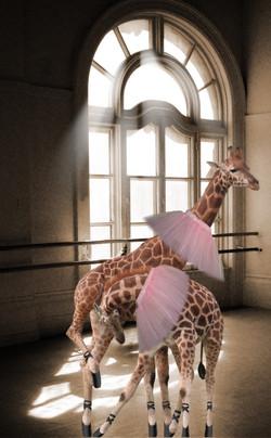 Giraffe Ballet