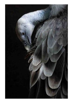 a3 bird sm.jpg