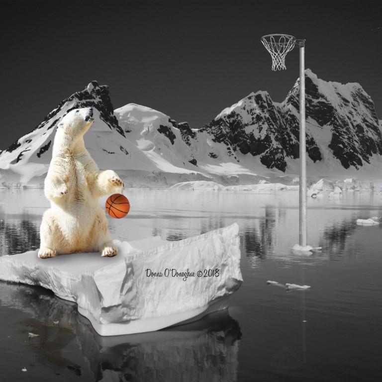 Polar Ber
