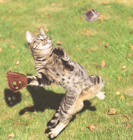 Baseball kitty
