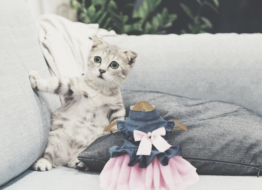 photo-of-gray-and-white-tabby-kitten-sit