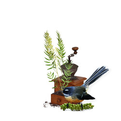 Fantail Peppercorn (Large)