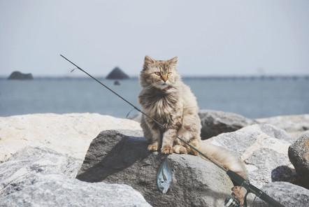 Fisher Kitty