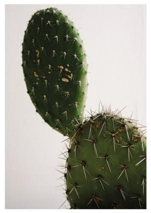 a3cactus (Medium).jpg