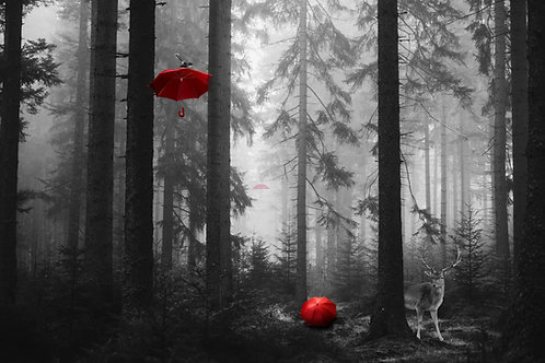 Umbrella Forest and Friends