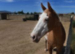 Circle L Home Horse 1.jpg