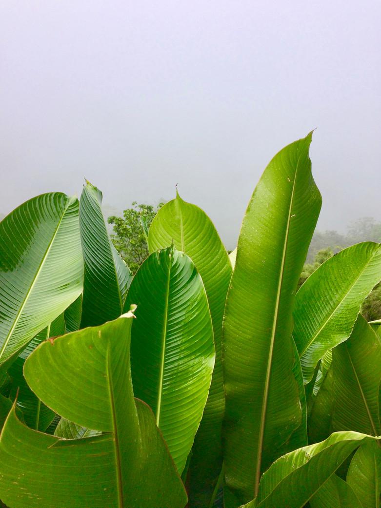 Poas Parque Nacional