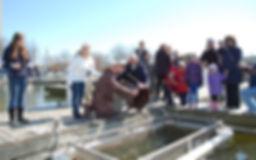 10,000 Chinook salmon will grow into kings of lake Ontario,