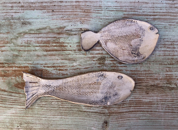 Duo platos pez comun