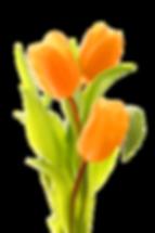 tulip01.png