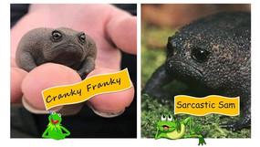 Do you know a grumpy frog?