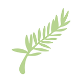 Big Spruce White Background.png