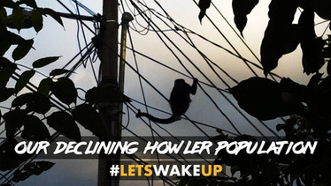 Our Declining Howler Population | #LetsWakeUp