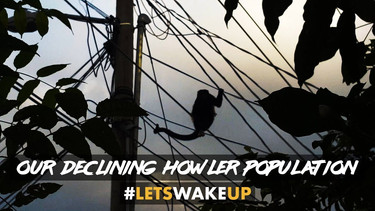 Our Declining Howler Population   #LetsWakeUp