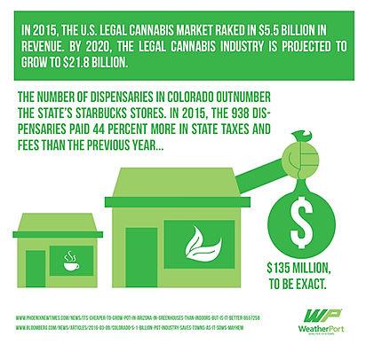 cannabis growth pic.jpg