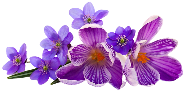flores_edited_edited.png
