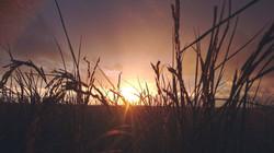 米所ならではの稲穂の絨毯