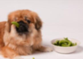dog-with-beans.jpg