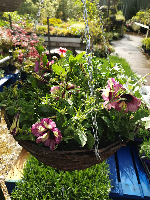 "Planted 14"" wicker basket"
