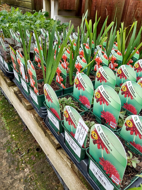 New stock 9cm perennials. From: