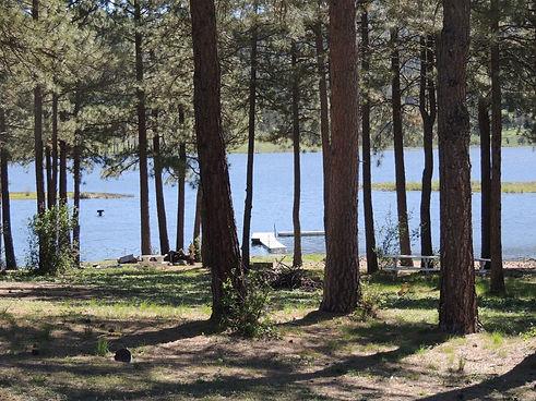 84940 dog lake view of lake.jpg