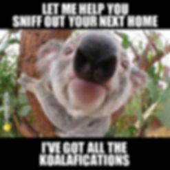 2-koalafications.jpg