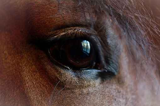 Equine Therapy - Equine Assisted Therapy in Bloomington. Compassionate therapy for horse and human.