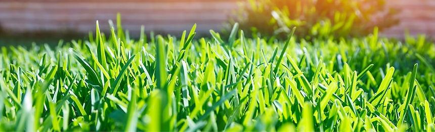 Green_Grass_Sun_1170x300-min.jpg