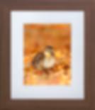 wildlife photography print Jonathan Harrod