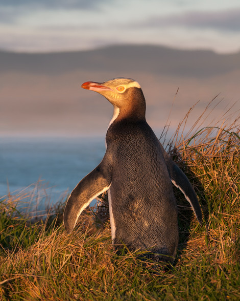 Penguin sunrise work file web.jpg