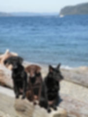 Dogs Log beach.jpg