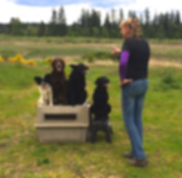 Tacoma Rock Star Dog Training.jpg