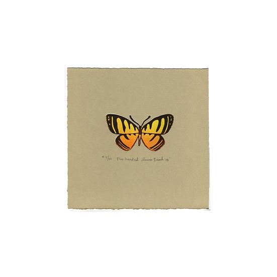 Fire-banded Metalmark (Hyphilaria parthenis)