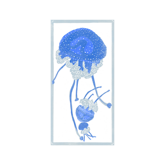 AUS Spotted Jellyfish (Phyllorhiza Punctate)