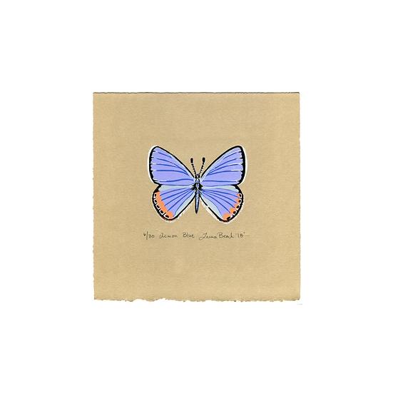Acmon Blue (Plebejus acmon)
