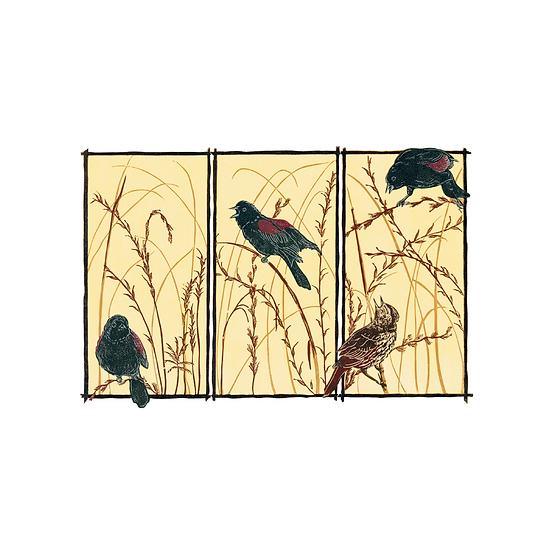 Redwing (Agelaius Phoeniceus)