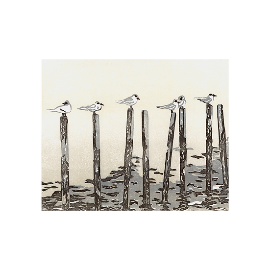 Morning Meeting: C.Terns (Sterna Hirundo)