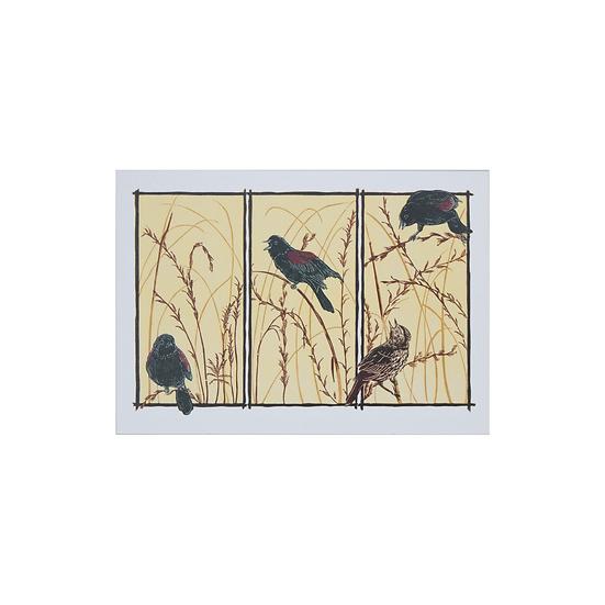 Redwing Blackbirds (Agelaius phoeniceus)