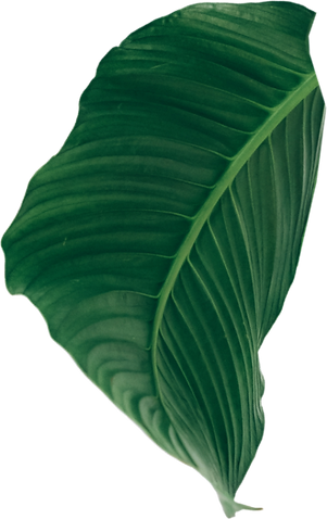 leaf copy_edited.png