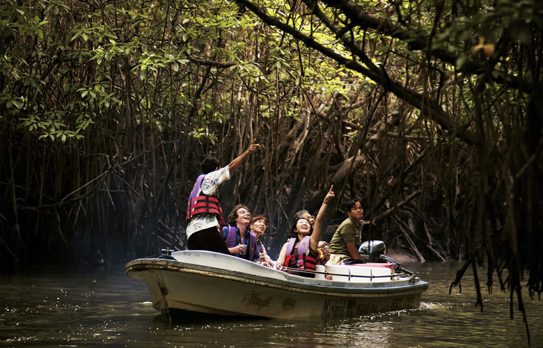 MANGROVE DISCOVERY 9 AM and 4PM - ADULT